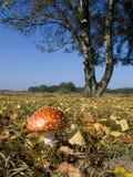 toadstool осени Стоковое Фото