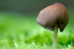Toadstool Stock Photography