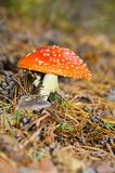 Toadstool Images stock