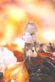 toadstool Стоковые Изображения RF