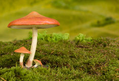 Toadstool background for fairytale Stock Photos