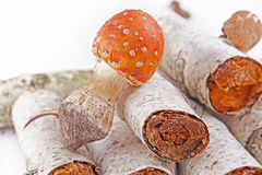 Toadstool in the birch forest Stock Photography
