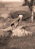 Toadstool di pietra nella seppia Fotografia Stock
