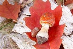 Toadstool en el bosque Fotos de archivo