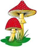 Toadstool en hierba Foto de archivo libre de regalías