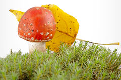 Toadstool at the forest Stock Photos