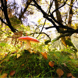 Toadstool on forest floor Stock Photography