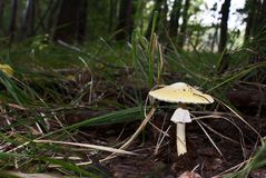 Toadstool in the forest Stock Photo