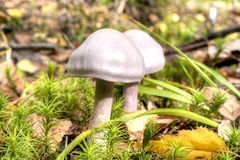 Toadstool in forest Royalty Free Stock Photography