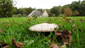 Toadstool and Frisian Farm Royalty Free Stock Photos