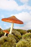 Toadstool for a gnome Stock Image
