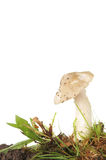 Toadstool in grass Stock Photos