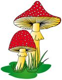 Toadstool in grass Royalty Free Stock Photo
