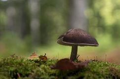 Toadstool on moss. Toadstool on the moss in the forest Royalty Free Stock Photos