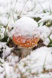 Toadstool na neve Foto de Stock Royalty Free