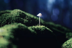 Toadstool Stock Images