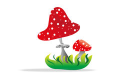 Toadstool Royalty Free Stock Images
