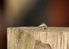 Toadstool in Sunlight Stock Photography