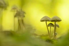 Toadstools в атмосфере конспекта искусства Стоковая Фотография