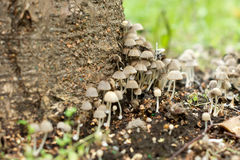 Toadstools в лесе Стоковое Изображение