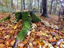 Toadstools в осени Стоковые Изображения RF