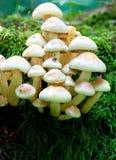 toadstools группы Стоковое Изображение