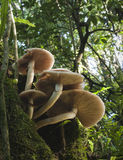 Toadstools на дереве Стоковое Фото