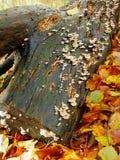 Toadstools на стволе дерева Стоковое фото RF