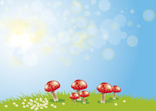 Toadstools libre illustration