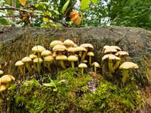Toadstools Stock Photography