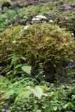 toadstools Стоковые Изображения RF