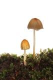 2 toadstools Стоковые Изображения RF