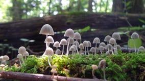 toadstools Стоковые Фото