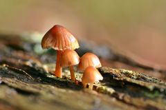 Toadstools Stock Photo