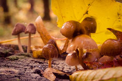 Toadstools are in an autumn park Stock Photos
