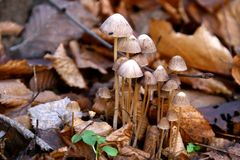 Toadstools del otoño Imagen de archivo