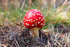 toadstools in a forest Stock Image