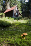 Toadstools in moss Stock Photo