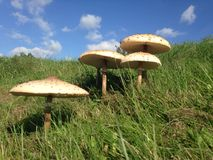 toadstools in nature stock photography