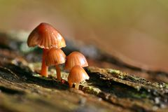 Toadstools no. 2. Toadstools growing on a tree stump in damp conditions. Left Aligned Stock Image