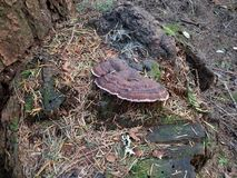 Toady. Tree toad stool love stock photo