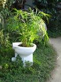 Toalete crescente de bambu do formulário na ilha de Lamma HK foto de stock royalty free