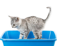 Toalete do gato fotografia de stock royalty free