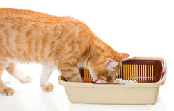 Toalete do gato e do plástico fotografia de stock