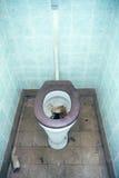 Toalete obstruído fotografia de stock royalty free