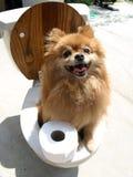 toalety szkolenia obrazy royalty free