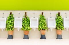 Toalety wnętrze z białym pisuaru rzędem i ornamentacyjnymi roślinami Zdjęcia Stock