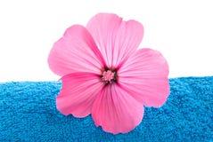 Toalla y flor rosada foto de archivo