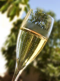 A toast at the garden Stock Photography