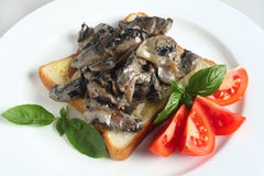 Toast with mushrooms in cream sauce Royalty Free Stock Photo